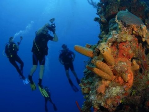 Military Veterans Are Helping To Save Coral Reefs By Combating Climate Change