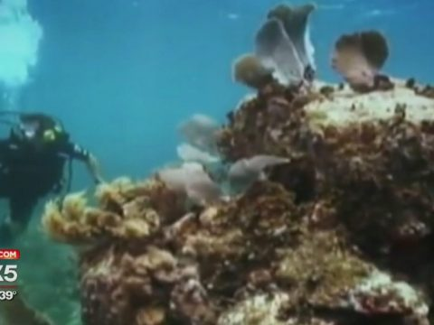 New Mission for Combat Veterans: Protect Coral Reefs