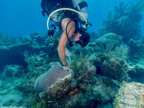 FORCE BLUE Wraps Up Coral Disease Intervention Work