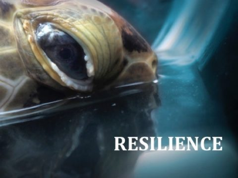 """FORCE BLUE to premiere """"RESILIENCE"""" on Facebook"""